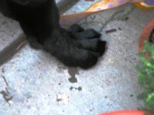 Elijah - foot at 11 weeks