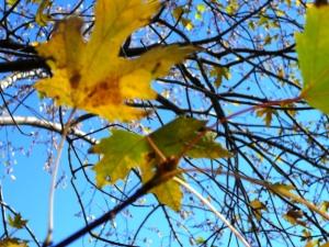 leaves sky