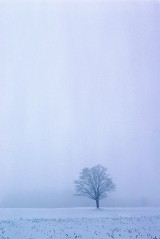 Tree in the Winter Mist