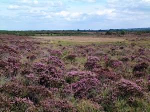 Heath view