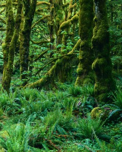 Northwest Temperate Rainforest