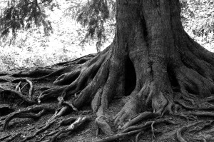 tree_roots