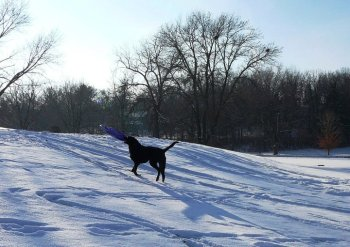 Eli in the snow